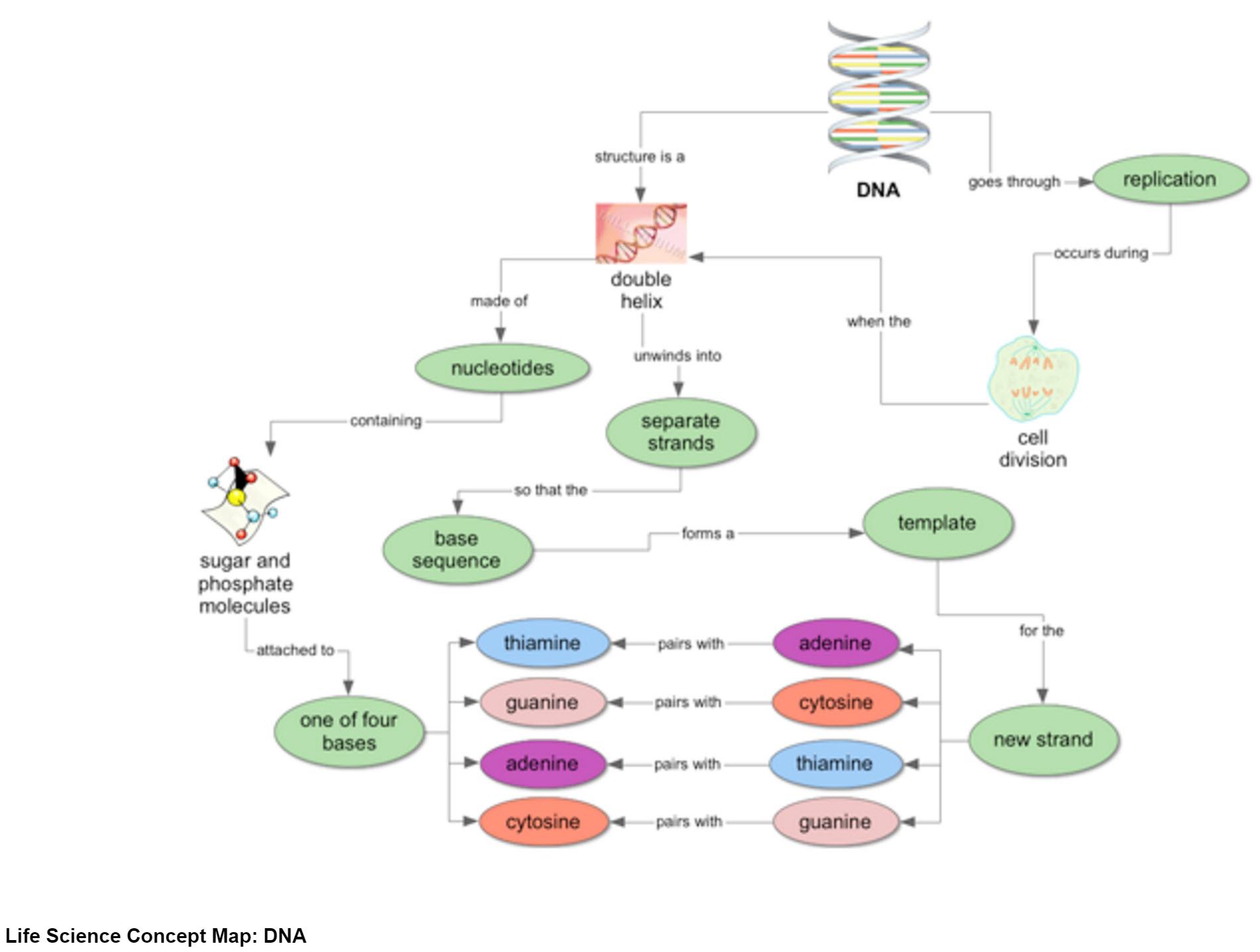 28 Concept Map Cellular Respiration - Online Map Around ...